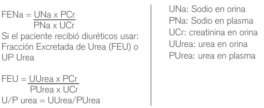 imagen1_insuficiencia-renal-aguda
